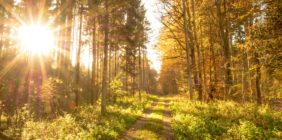 Mazowiecki Park Krajobrazowy – spacer po przyrodniczej stronie mocy!