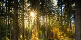 Mazowiecki Park Krajobrazowy – jesienny spacer!