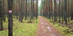 Od Zalesia do Konstancina – spacer po Lasach Chojnowskich