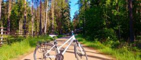 Rowerowa sobota w Puszczy Białowieskiej – żubry, Miejsce Mocy i zalew!